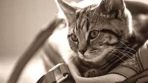 meilleur sac de transport chat